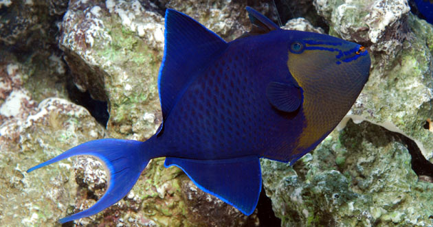 Fish Only Fowlr Or Reef Which Aquarium Setup Is Right For You