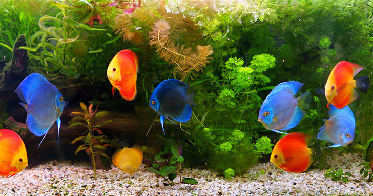 Image result for freshwater aquarium fish