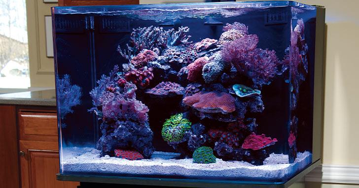 Aquascaping Nano Reef Aquariums