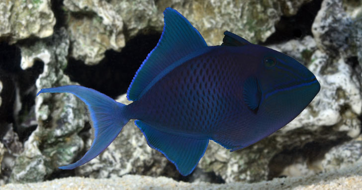 Fish-Only, FOWLR, or Reef: Which Aquarium Setup is Right For You?