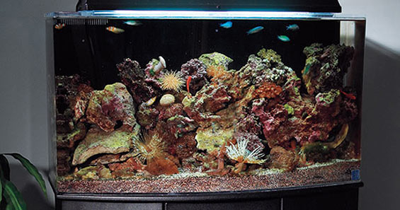 aquarium set up step by step guide to creating a reef aquarium