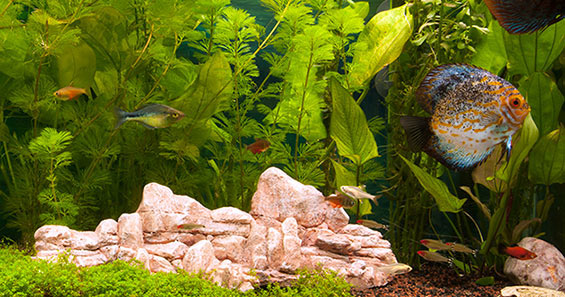 how to set up a planted aquarium rh m liveaquaria com