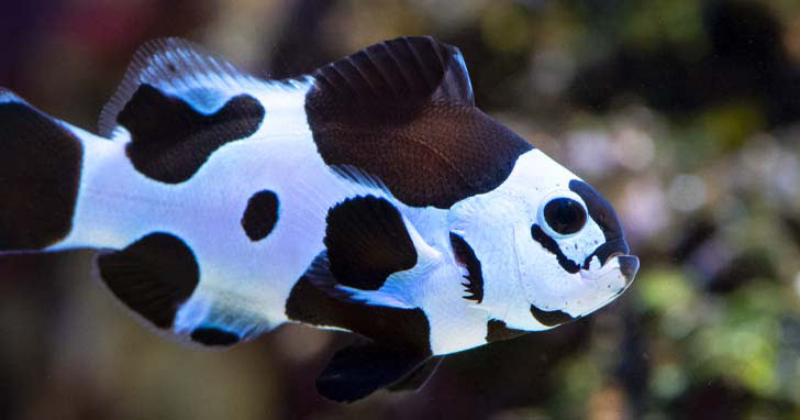 Clownfish Care Finding Nemo In Your Home