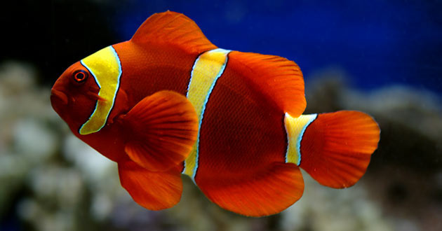 Aquarium Fish Diet Feed Different Foods For Complete Fish Nutrition