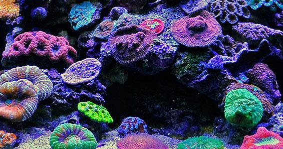 Nano reef beginner's guide | coral & sky.