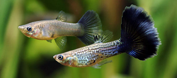 Understanding Aquarium Fish Nutrition What To Feed Your Fish