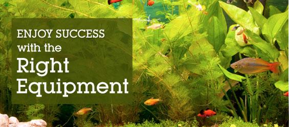 aquarium essentials overview enjoy success with the right equipment