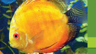 Aquarium Fish Health & Diseases: Fungal Infections in Fish