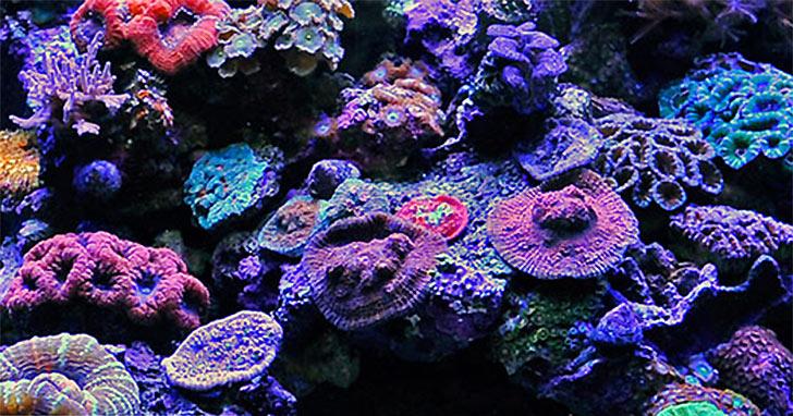 Considering A Nano Aquarium Top 10 Tips For Small Aquarium Success