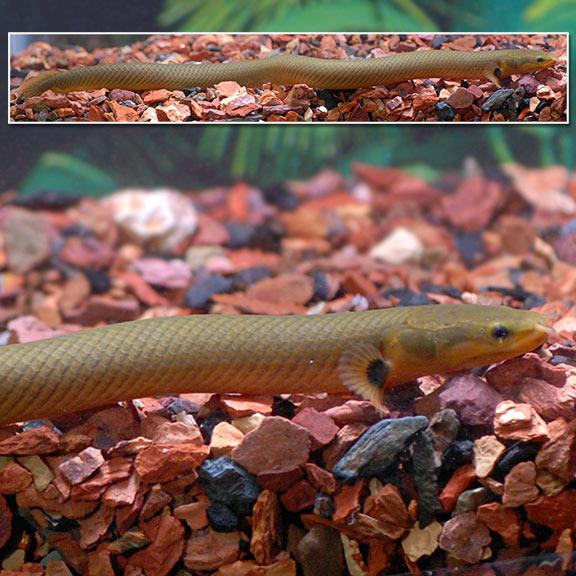 FW - Rope Fish